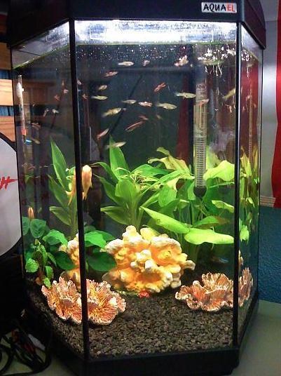 Guia acuario cu ntos peces caben for Cuantos litros de agua caben en una piscina